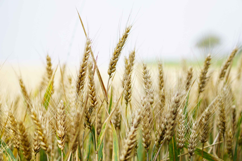 impact-sequencage-nouvelle-generation-securite-alimentaire